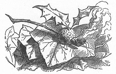 イラスト: ドラゴンフライ